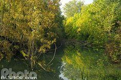 Photo : Bras mort du Rhin, Réserve naturelle Ile du Rohrschollen, Strasbourg, Bas-Rhin (67)
