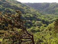 8 csodálatos, érintetlen völgy Magyarországon: álomszép vidékeken vezet végig az út - Utazás | Femina Travel Tips, Tours, River, Outdoor, Outdoors, Travel Advice, Outdoor Games, The Great Outdoors, Travel Hacks