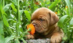 İlginçBiBilgi:İnsan burnu 50.000 kokuyu tanır ve hatırlar, neredeyse köpek burnu kadar güçlüdür..
