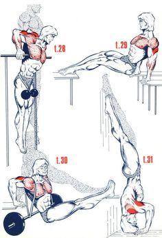 Triceps6