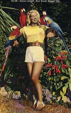 parrot queen