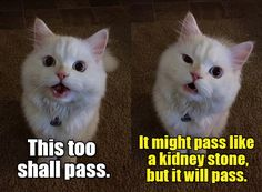 15 Funny Animal Memes For Anyone Who Could Use a Laugh Right Now - World's largest collection of cat memes and other animals Funny Animal Memes, Cute Funny Animals, Funny Animal Pictures, Funny Cute, Funny Shit, Animal Pics, Funny Memes, Hilarious Pictures, Cute Cat Memes