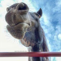 The Barnyard, Horse Farms, Horses, Animals, Animales, Animaux, Animal, Animais, Horse