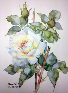 Roses by Ti Watercolor Watercolor Rose, Watercolor Cards, Watercolor Paintings, Watercolors, Rose Paintings, Art Aquarelle, Arte Floral, Botanical Art, Flower Art