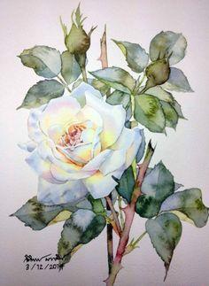 Roses by Ti Watercolor Watercolor Rose, Watercolor Cards, Watercolor Paintings, Art Aquarelle, Arte Floral, Botanical Art, Flower Art, Art Drawings, Drawing Art