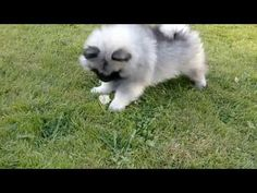 Puppy vs Dandelion