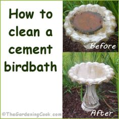 How To Clean A Cement Birdbath in a few easy steps.  Encourage the feathered friends with a sparkling clean place to land!