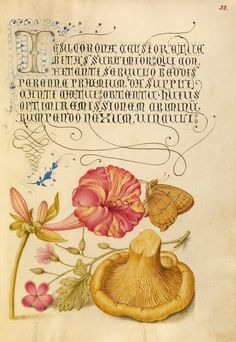 Four-o'Clock, Brown Hairstreak, Herb Robert, and Chanterelle; Joris Hoefnagel (Flemish / Hungarian, 1542 - 1600), and Georg Bocskay (Hungarian, died 1575); Vienna, Austria; 1561 - 1562; illumination added 1591 - 1596; Watercolors, gold and silver paint, and ink on parchment; Leaf: 16.6 x 12.4 cm (6 9/16 x 4 7/8 in.); Ms. 20, fol. 32. High res image from the Getty Museum.