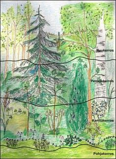 Metsän kerrokset. Finnish Language, Environmental Studies, Arts Integration, Tree Forest, Teaching Materials, Science And Nature, Botany, Geography, Finland