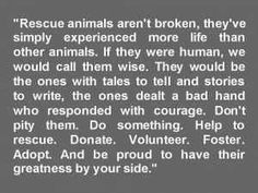 As a writer, I completely agree. I wish I knew all the stories my adopted pups could tell.