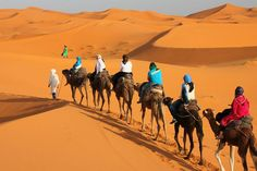 Are you looking to holiday trip safely and meet new people? #MoroccoCamelTrekking will take you anywhere you wish to go.