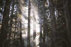 Photo by Whitney Justesen - trees, passing, sunlight, forest