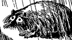 The Muskrat  -  from the Moomin books by Tove Jansson