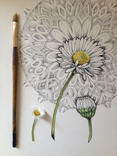 A Daisy (process shot) by Noel Badges Pugh. Ink & watercolor