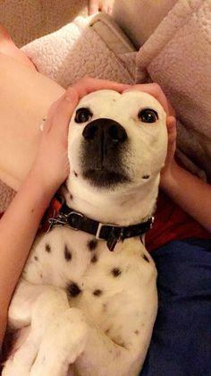 Precious #SpottyDotty