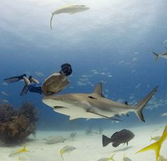 Production still from Sharkwater © Rob Stewart