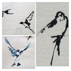 Swallow sketches by Judith C