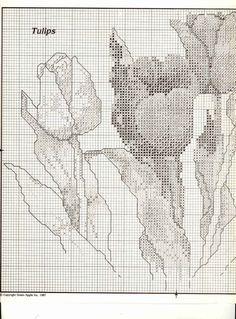 Gallery.ru / Фото #1 - tulipany - mizia