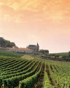 The Healthy Press: Beaujolais vs Bordeaux - First Wine Battle Uploaded... Both French!! Cheers,