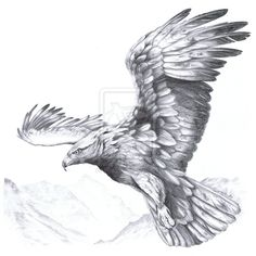 eagle anatomy - Szukaj w Google More