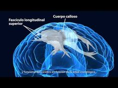Adolescencia y neurociencia | El Cerebro en el Aula