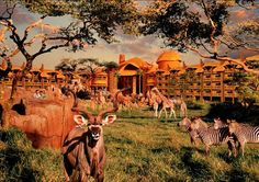 Disney's Animal kingdom lodge- Where giraffes come up to your window.