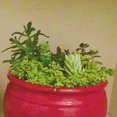 Cerâmica colorida G para fechar o mês! Quer uma?  #oitominhocas #suculentas #suculovers #ceramica #decoração #elo7br #plantinhas