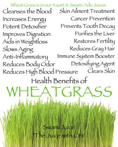 I have been looking all over for wheatgrass it's so good for you I guess I'll have to go to the city maybe?