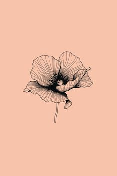 Shop for Bespoke Wedding Stationery, Greeting Cards and Art Prints. Illustration Blume, Botanical Illustration, Autumn Illustration, Black And White Illustration, Noir Tattoo, Drawing Sketches, Art Drawings, Tattoo Schwarz, Poppies Tattoo