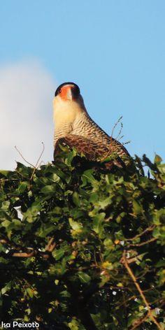 Já disse que adoro pássaros? Fotografia e Edição: Isabella Peixoto