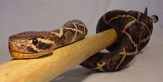 Snake Stick Carving How To