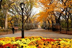 new york city in the fall | ... : Central Park In Fall Color New York City, unlicensed use prohibited