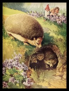 "A. E. Kennedy. Hedgehogs. 1938.  (Possibly from the book ""Countryside Folk"")"