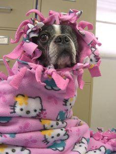 dog blanket..soooooo alyssa