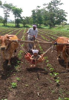 Ploughing the fields. The kid gets a free ride! - Zeynep Kurtulay - - Ploughing the fields. The kid gets a free ride! People Around The World, Around The Worlds, Village Photography, Indian Village, Amazing India, India Travel, World Cultures, Belle Photo, Funny Pictures