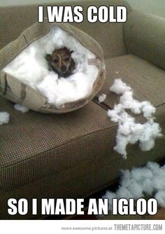 Hilarious. My dog did the same thing to our couch that looked just like this one.