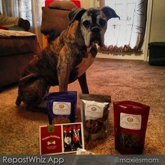 Dog Care Essentials / www.PetWellbeing.org