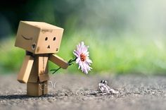 pics of cute frogs on tumlr | boxes, boxman , cute, flower, frog - inspiring picture on Favim.com ...