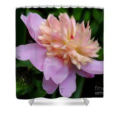 Beautiful pink peony flower nature shower curtain.  Photo painting by Susan.