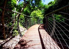 The walkway meanders through the Arboretum also known as the Enchanted Forest in the Kirstenbosch Botanical Garden Cape Town. The 130 metre long walkway is made from galvanised steel and timber and will stretch 11 metres above the ground. Outdoor Walkway, Brick Walkway, Landscape Architecture, Landscape Design, Stamped Concrete Walkway, National Botanical Gardens, Wooden Walkways, Sustainable City, Parking Design