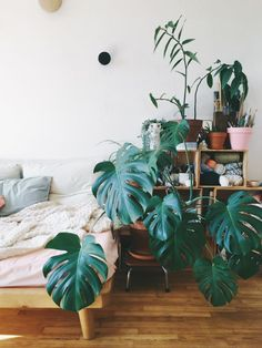 Monstera Living Room | Plan B by Morganours