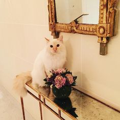 https://flic.kr/p/AV4We9 | Hide-and-seek. Level: Unbeatable))) #cat #cutecat #amazing #inspiring #beautifulcat #funny #fun #hilarious #lovely #pet #mirror #flowers #interior #awesome