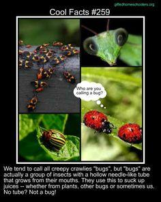 Cool facts #259  http://askabiologist.asu.edu/explore/true-bugs