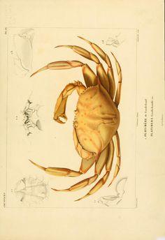 T.9 - Voyage dans l'Amérique Méridionale - Biodiversity Heritage Library