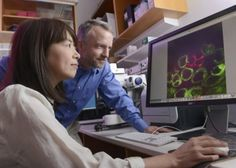 Researchers have found a previously unidentified mechanism that helps explain why stem cells undergo self-renewing divisions but their offspring do not.