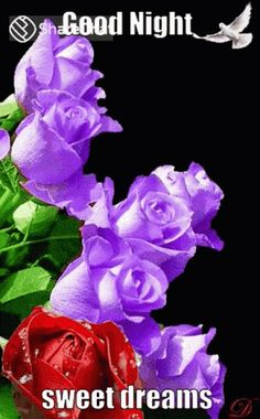 Good Night Love Images, Good Night Gif, Good Night Messages, Good Night Image, Roses Gif, Flowers Gif, Beautiful Flowers, Good Evening Greetings, Sunday Greetings