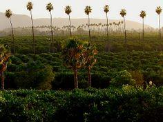 California Citrus State Historic Park #ChooseRiverside