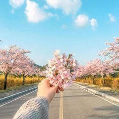 Aesthetic Photography Pastel, Pink Photography, Tumblr Photography, Nature Photography, Aesthetic Drawing, Flower Aesthetic, Blue Aesthetic, Hand Fotografie, Cute Profile Pictures