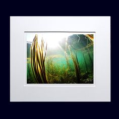 Beautiful underwater shot at Bloodyforeland in Co Donegal, Ireland. Includes 10 x 8 inches white card mount. Photo size 5 x 7 inches Printed on Photo glossy card. Irish Landscape, Underwater Photos, Water Photography, Donegal, Seaweed, Surfing, Wall Decor, Ocean, Tapestry