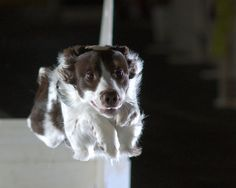 U.S. Military Testing Hover Dogs